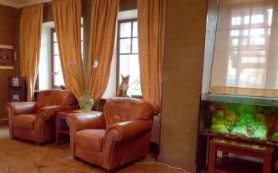 """Зона ожидания для посетителей филиал Лисий нос, пансионат для пожилых людей """"Домашний Уют"""", 1 этаж"""