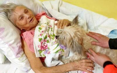 Зоотерапия для лежачих пожилых людей в пансионате Домашний Уют Санкт-Петербург